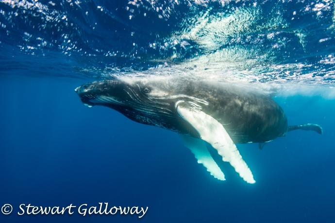 Stewart Galloway-33